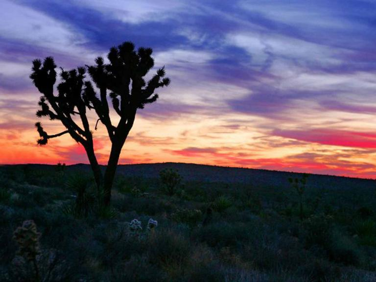 california-joshua-tree-gett.jpg
