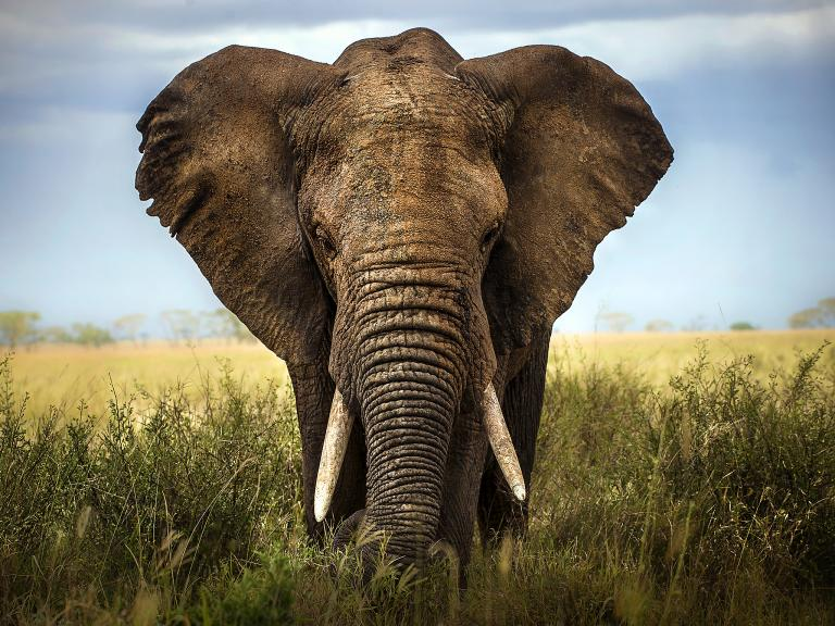 Conservatives quietly bin pledge to ban ivory trade in 2017 manifesto