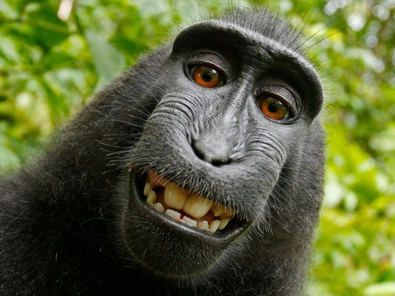 naturo-monkey-selfie.jpg