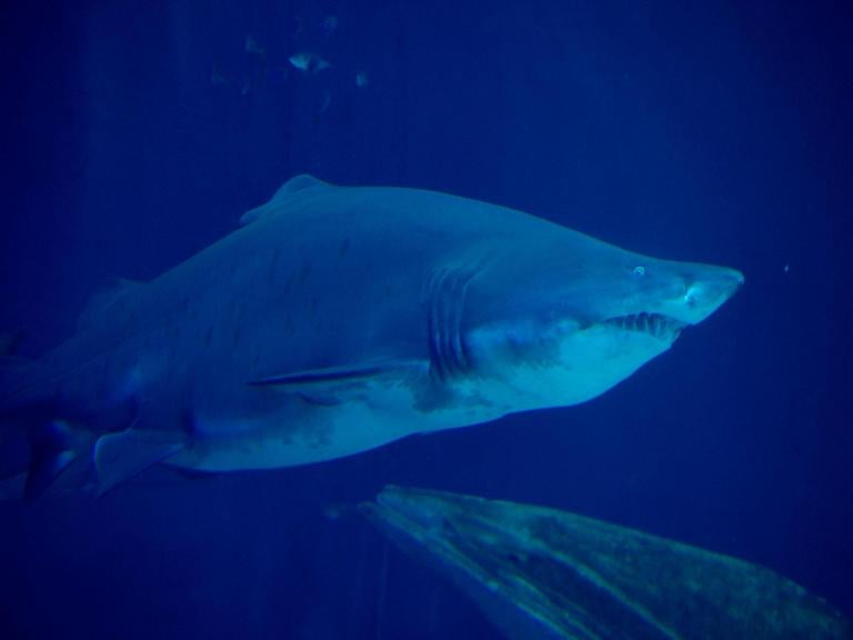 UK diver claims he was chased for 4.5 miles by tiger shark off coast of Australia