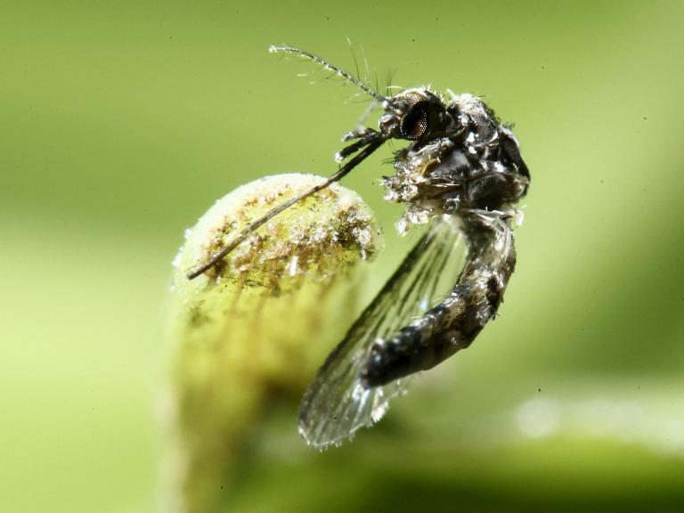 mosquitoes-miami.jpg
