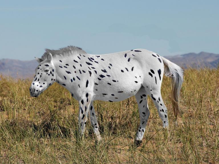 spotted-horse.jpg