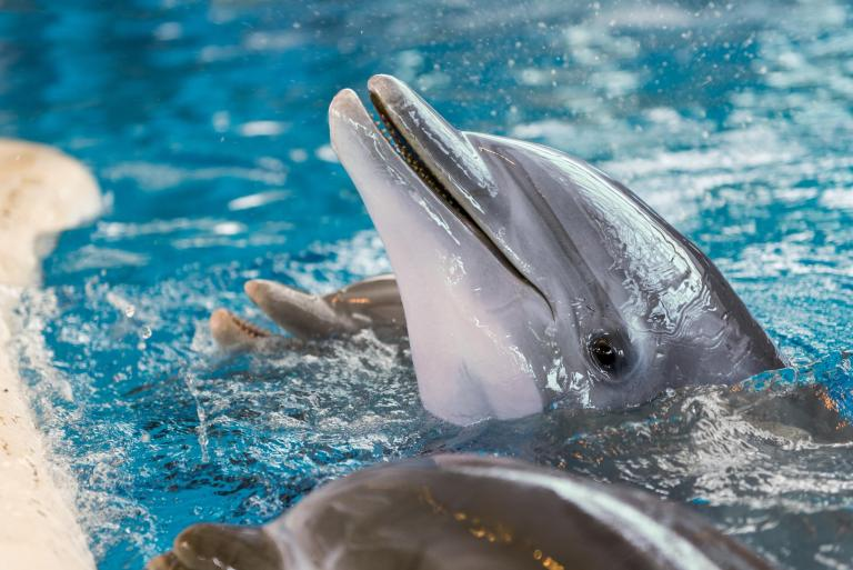 Virgin Holidays to invest in America's first dolphin sanctuary