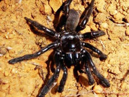 16-worlds-oldest-spider-0.jpg