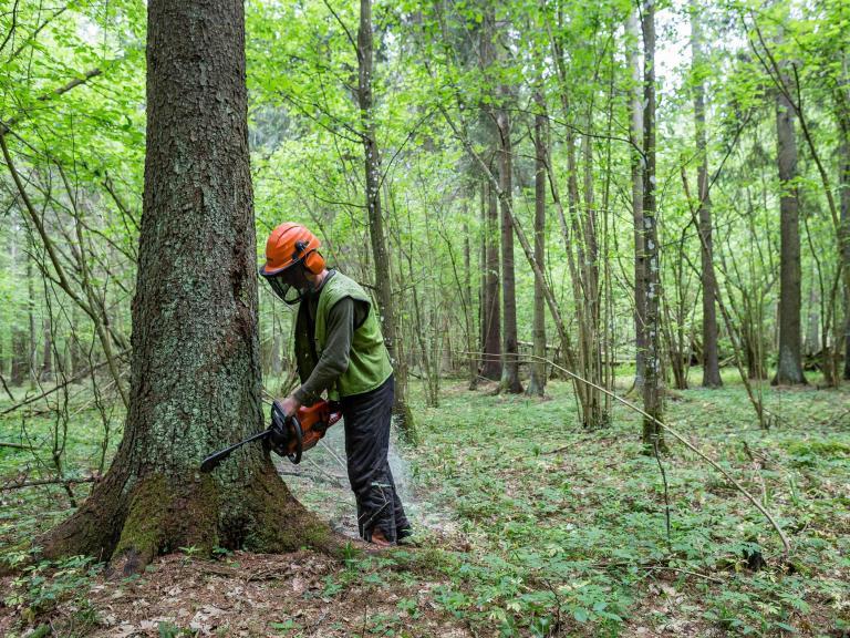 cutting-trees-poland.jpg