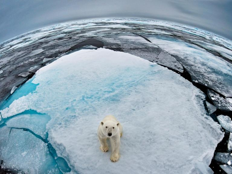 polar-bear-ice.jpg