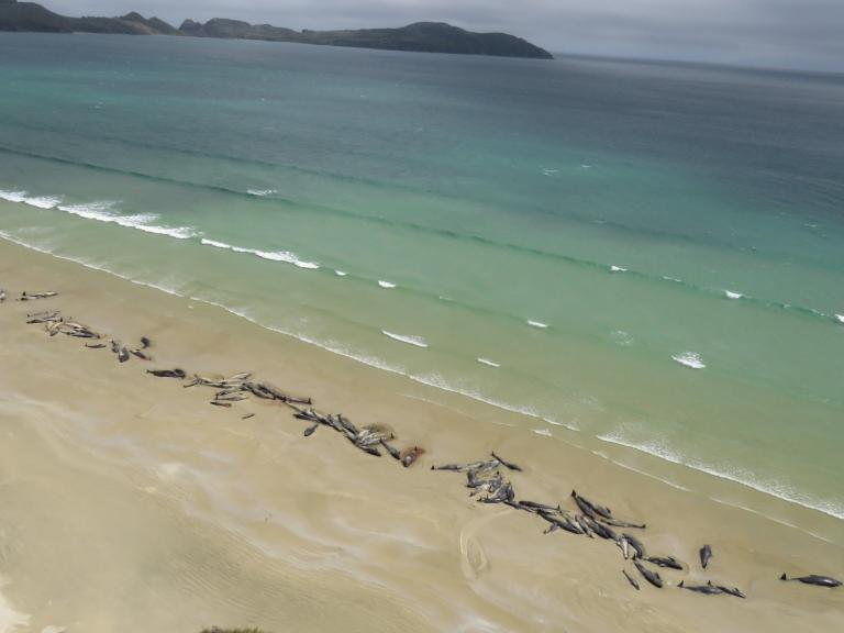 whales-stranded-new-zealand.jpg