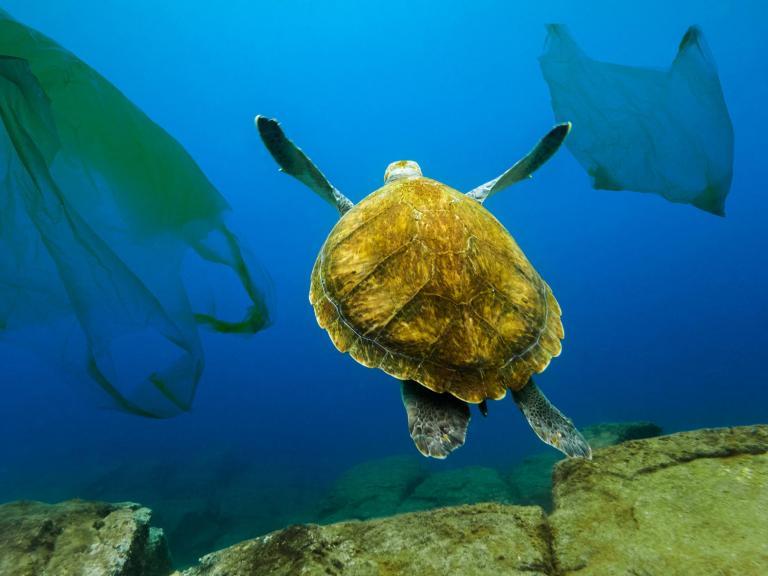 turtle-plastic-bags.jpg