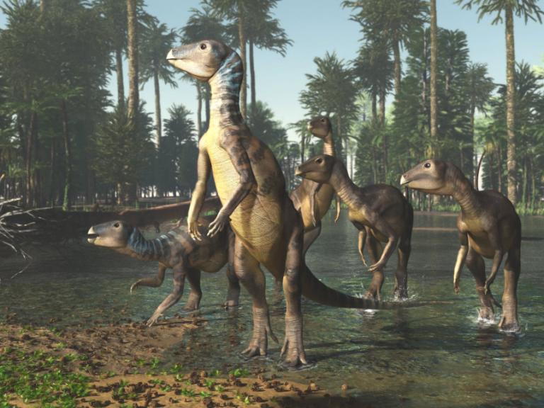 weewarrasaurus-pobeni-dinosaur.png