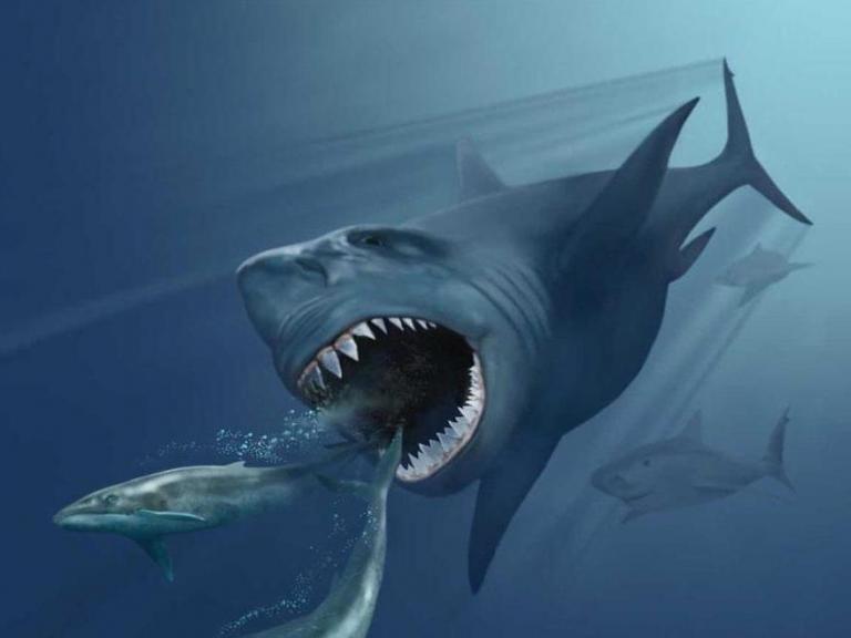 megalodon-shark.jpg