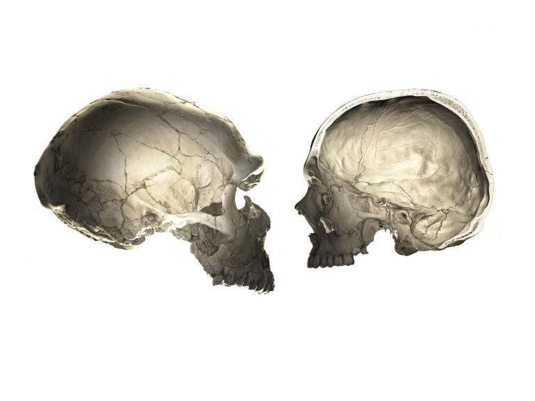 neanderthal-human-skull.jpg