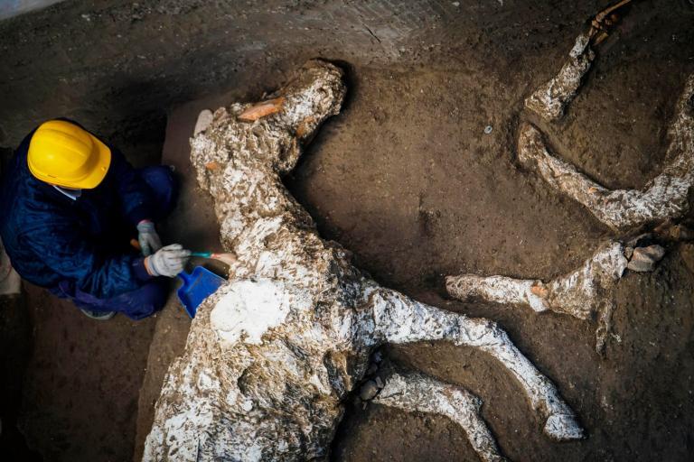 Pompeii-horse.jpg