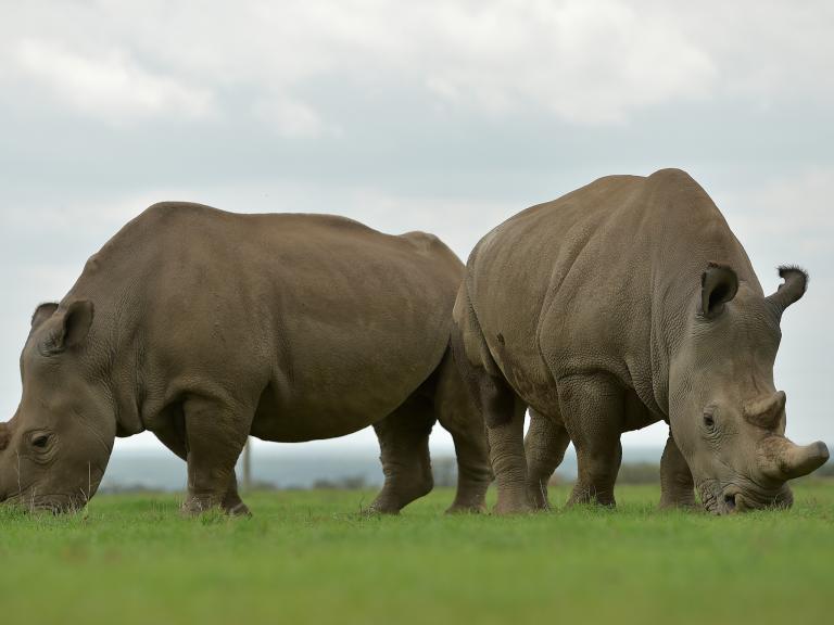 white-rhinoceroses.jpg