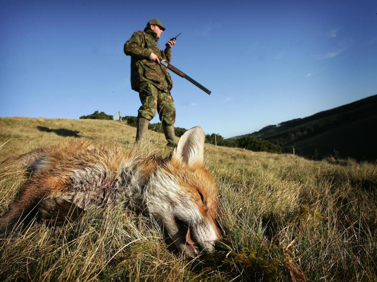 gettyimages-scotland-fox-shoot.jpg