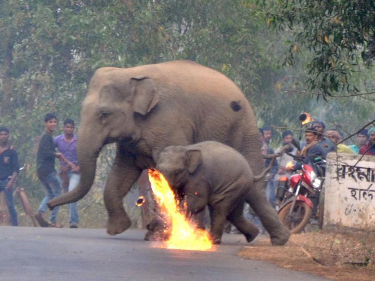 elephant-firebombed.jpg