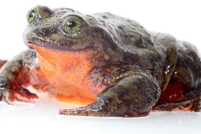 romeo-frog-full.jpg