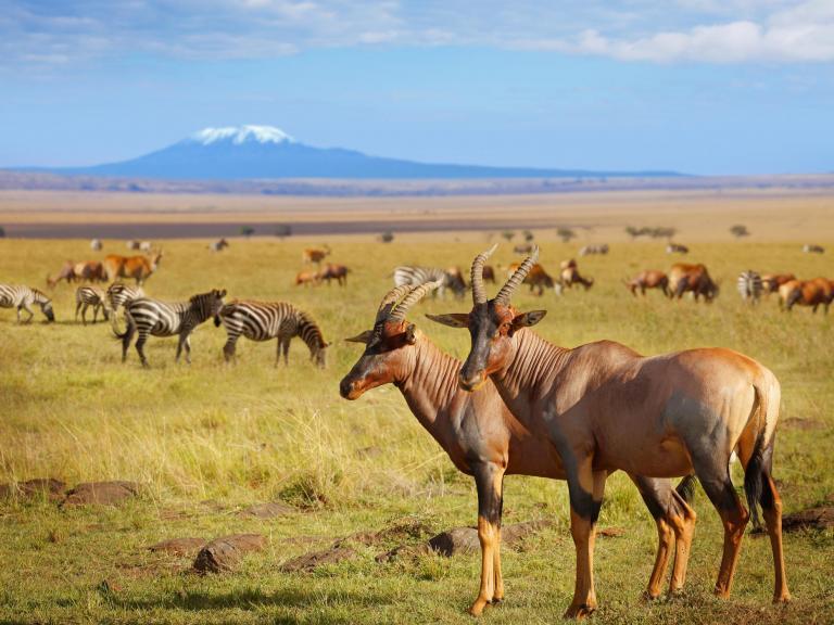 savannah-animals.jpg