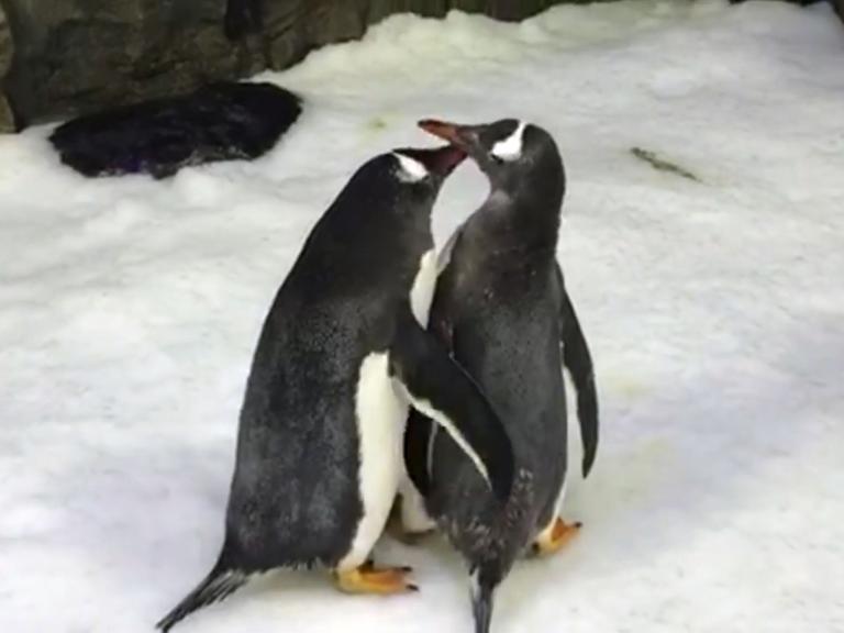 sydney-penguin210119.jpg