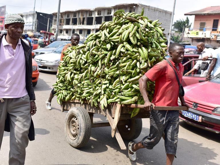 banana-ivory-coast.jpg