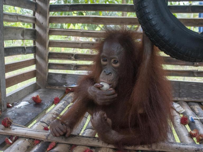 orangutan-cage.jpg