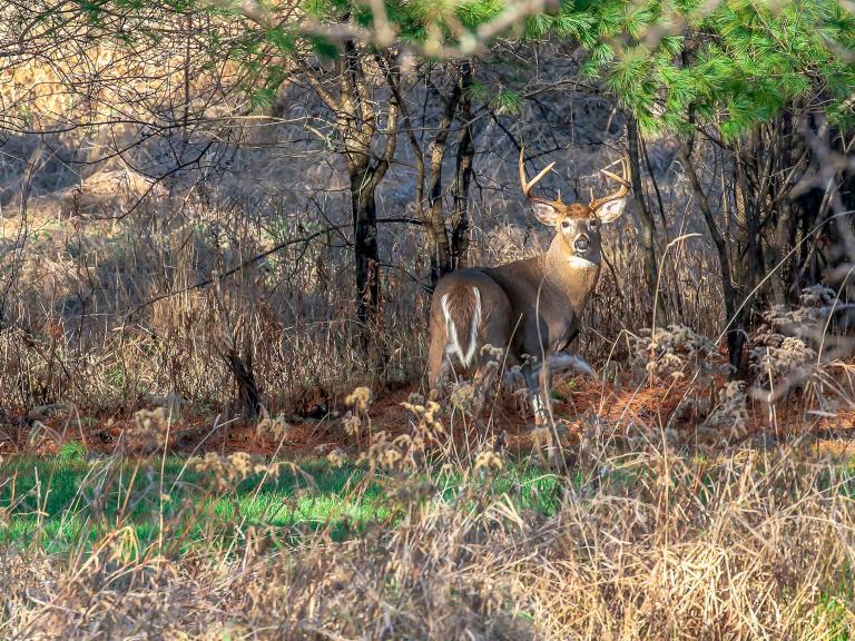 deerhunting110219.jpg