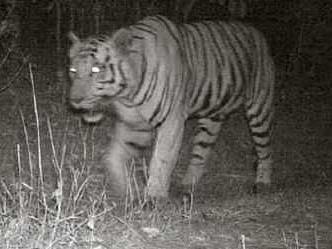 gujarat-tiger.jpg