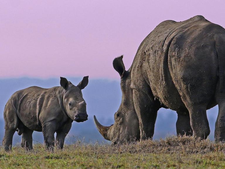 rhino-kenya.jpg
