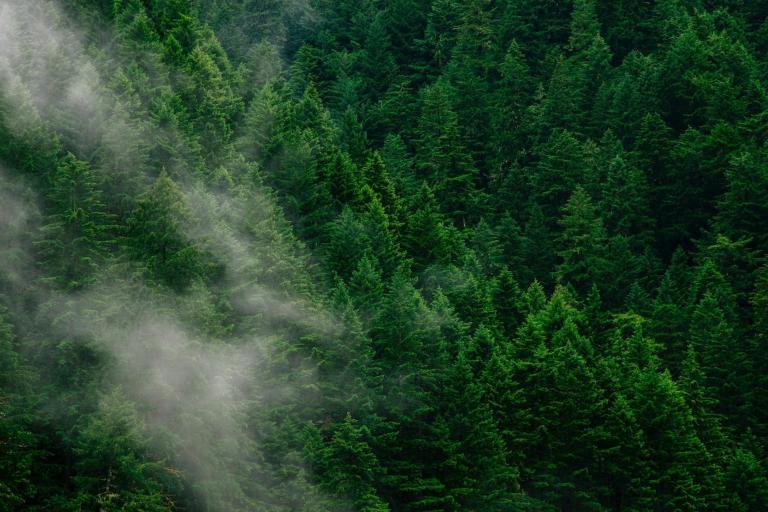 forest-smoke.jpg