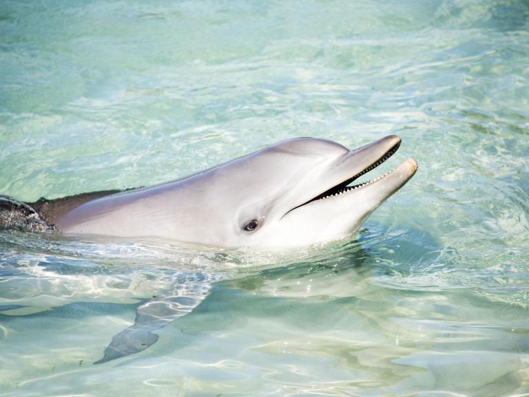 dolphin-smile.jpg
