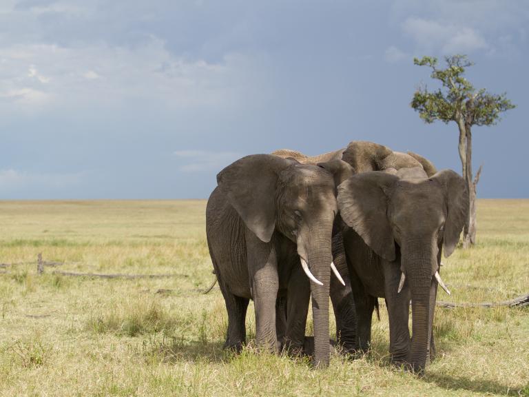 elephant-gorongosa.jpg