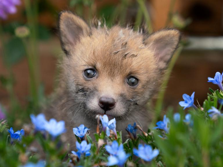 fox-cub-edited.jpg