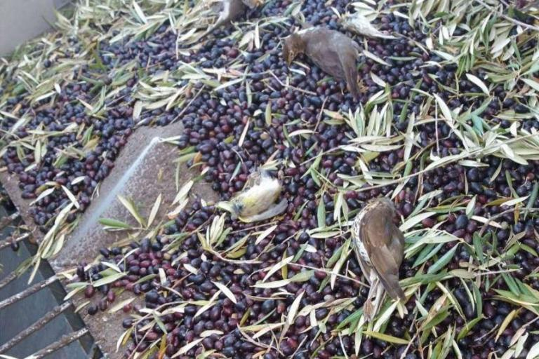 dead-birds.jpg