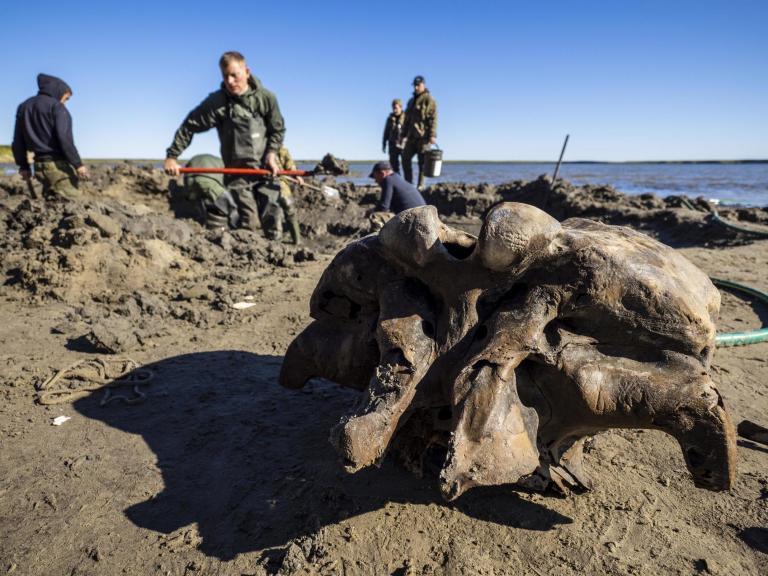 mammoth-bones.jpg