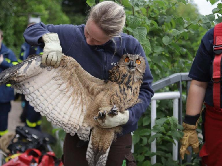 eagle-owl-germany-2.jpg