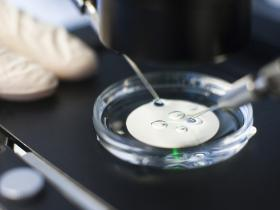 "Image result for : British scientists have used genome ""editing"" technology for therapeutic use of stem cells and in IVF"