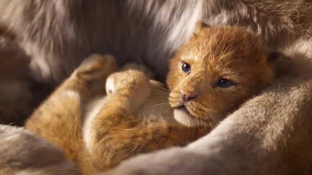 the lion king porn comics slow sex videos