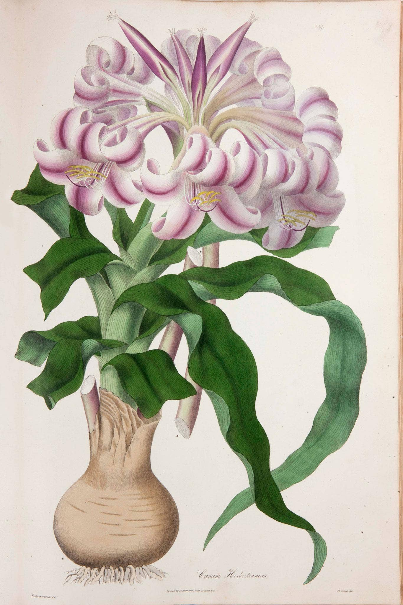 Flora illustrata is much more than a straight history of flower flora illustrata is much more than a straight history of flower painting the independent izmirmasajfo