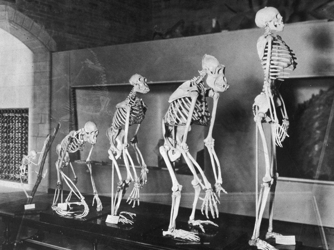 Who Is Lucy The Australopithecus And How Did She Show The Big