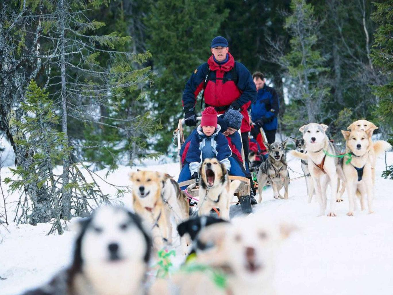 Zip World Caverns The Underground Lining Course Boosting Snow Dog Hd Wiring Harness Family Adventures From Wildlife Watching To A Husky Safari