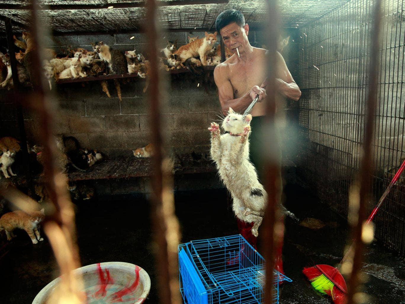 Stop the Yulin Dog Meat Festival in China: Animal welfare ... - photo#16