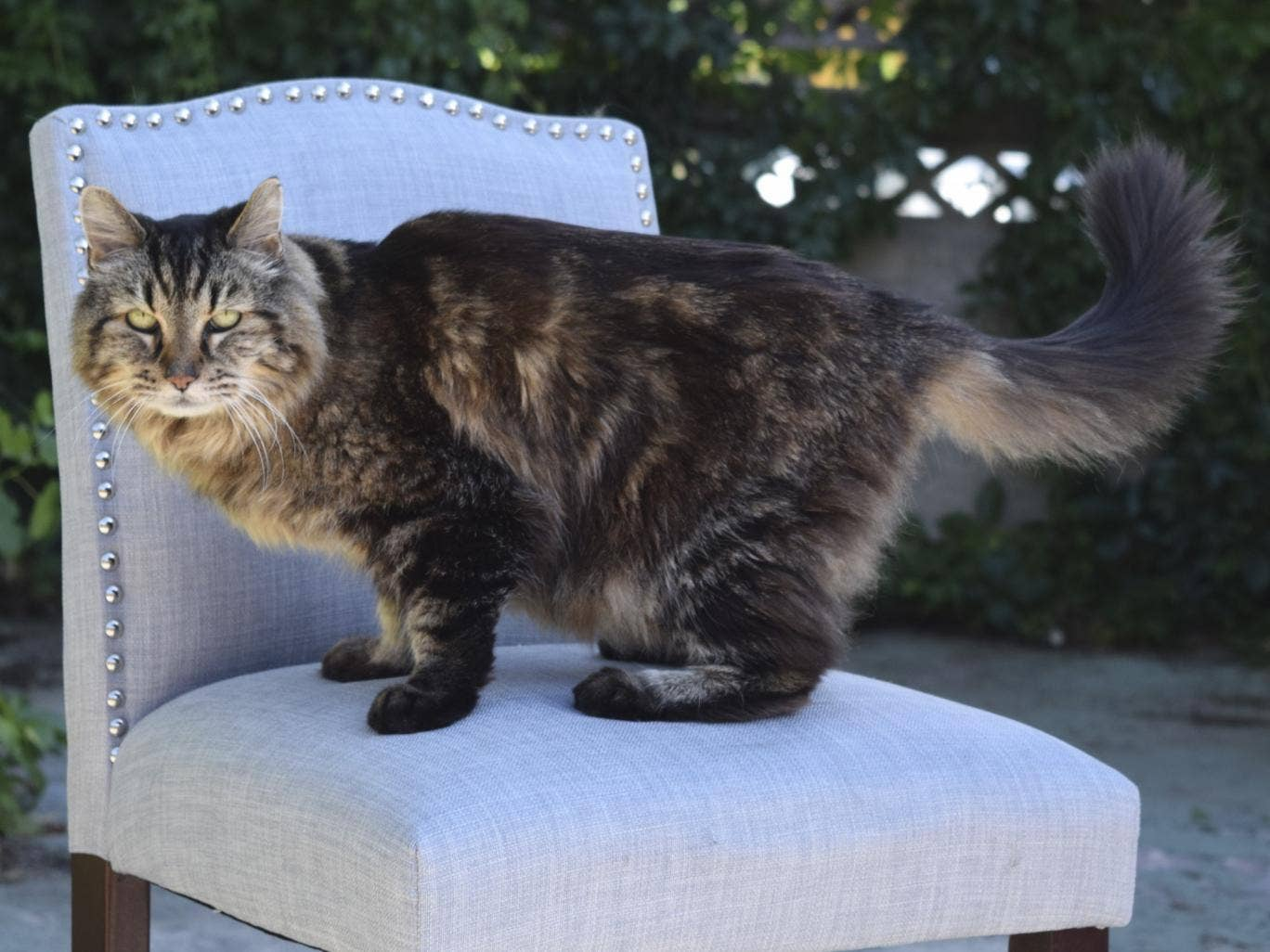 How to sew clothes for cats with their own hands Our detailed master class will tell you about it