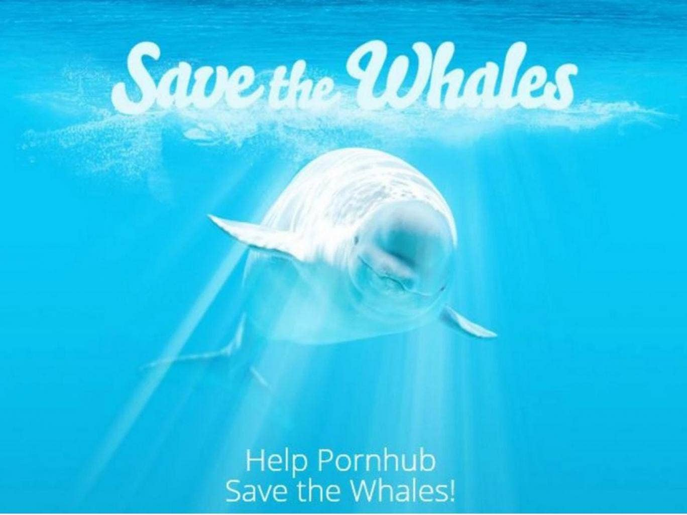 Pornhub save the whales