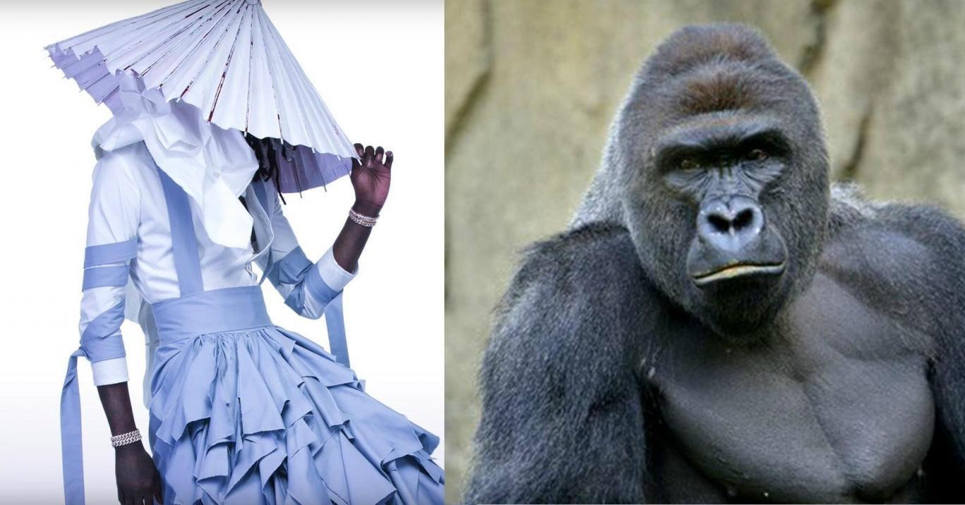 Gorilla harambe videos free porn videos