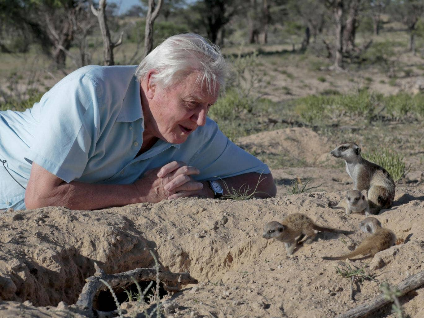 independent.co.uk - Ed Power - How David Attenborough changed television
