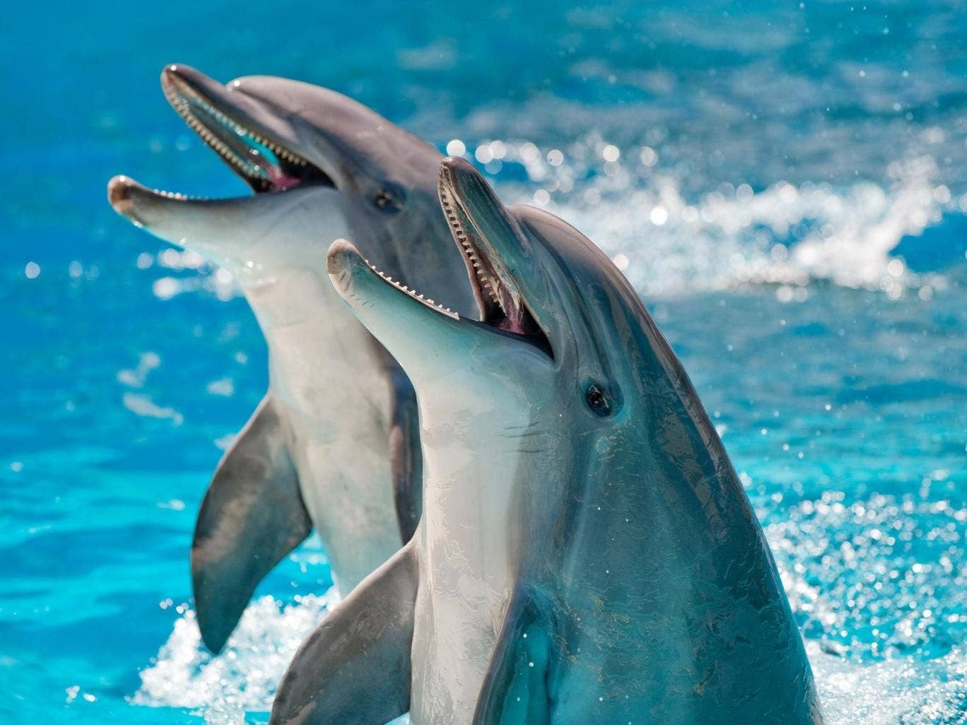 Scientists, Artificial Intelligence, Dolphins