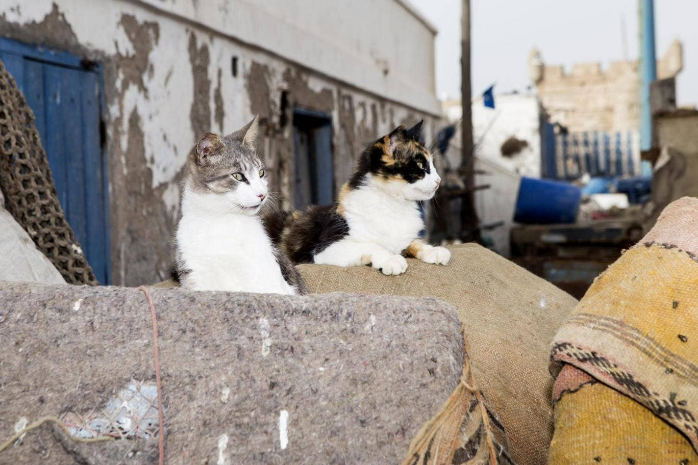 The Happy Cats of Morocco