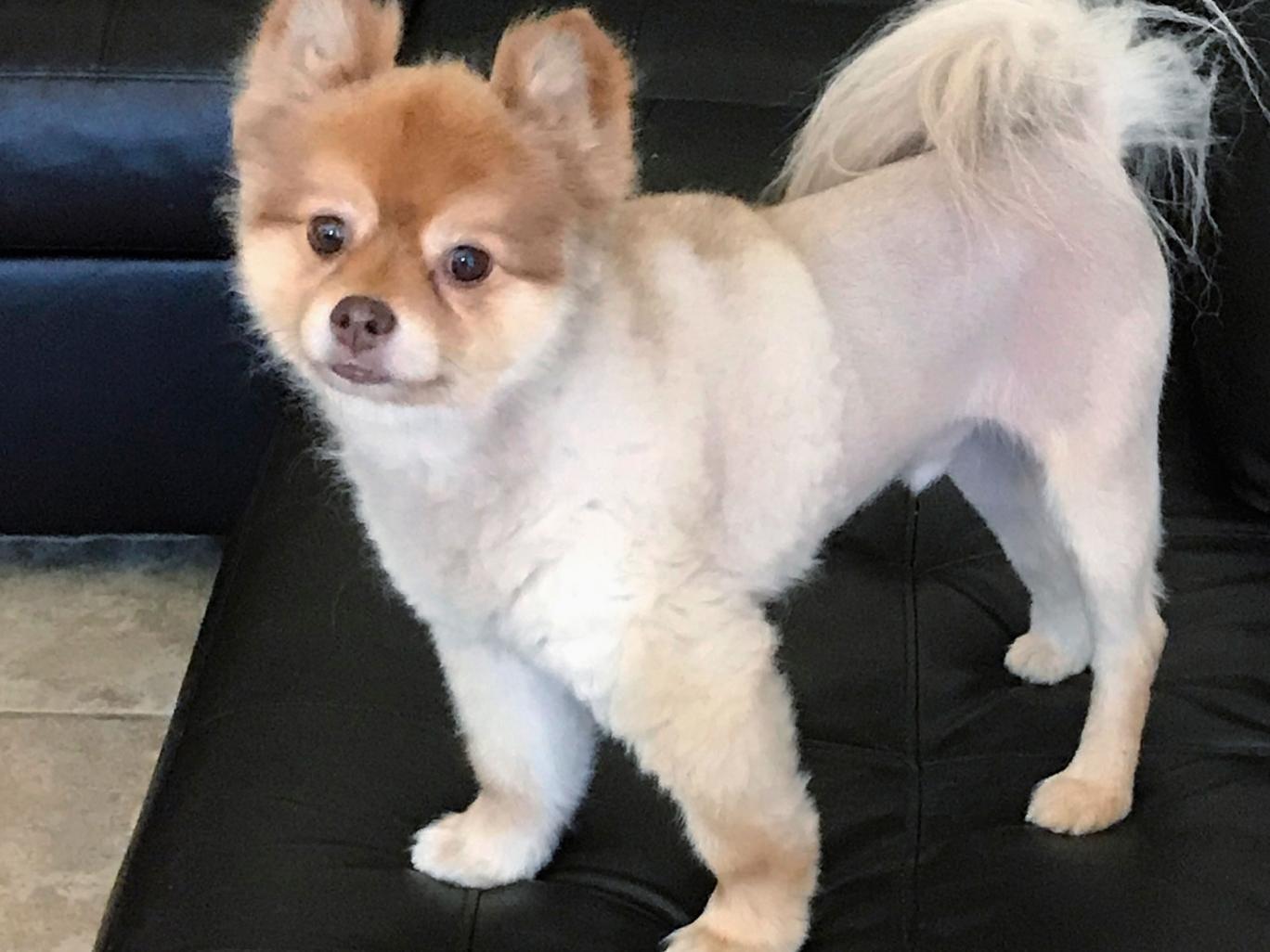 Bloody Blanket Found With Dead Pomeranian Dog After Delta Flight