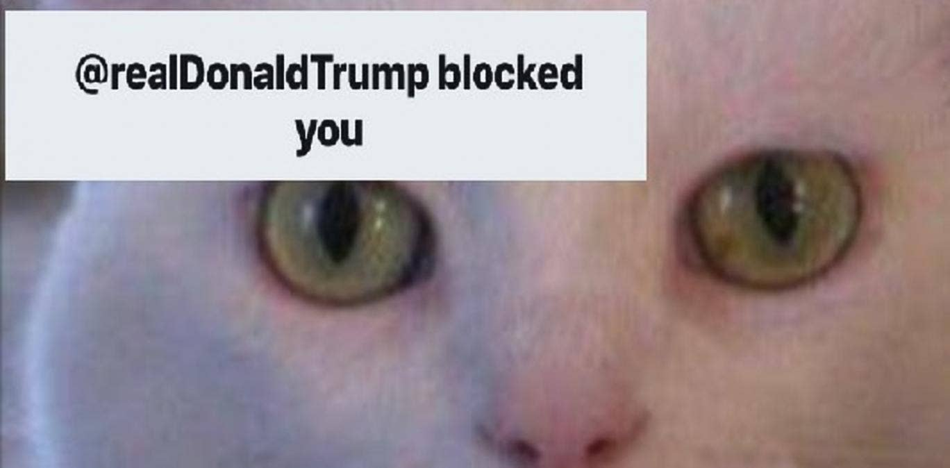 Donald Trump Blocks a Cat on Twitter