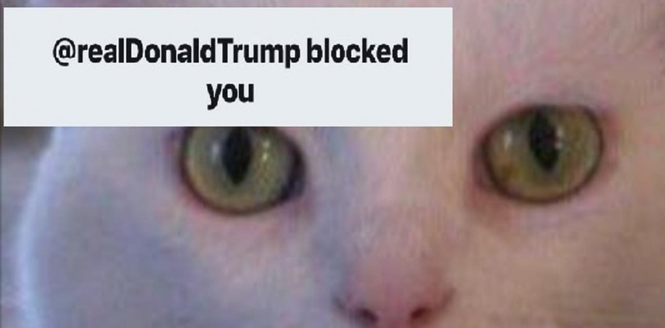 Donald Trump Blocks a Cat on Twitter