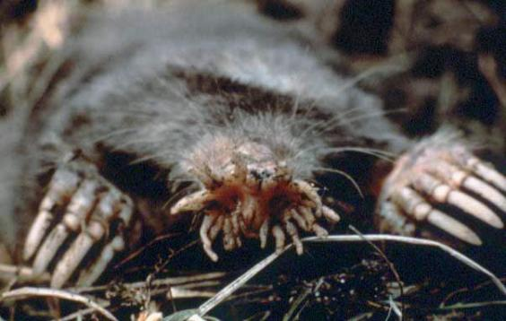 Animals Youve Almost Definitely Never Seen Before Indy - 18 terrifying strange animals didnt even know existed